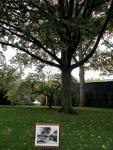 An oak tree that President Eisenhower planted.