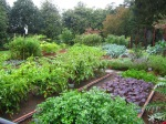 Many greens are grown in the White House Kitchen garden including chard, collard greens, and various types of lettuce.